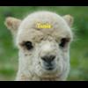 GoPro movie - ostatni post przez Tusia`